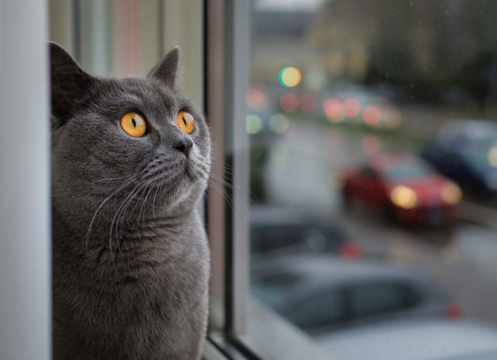 Hamaca para gatos ventana